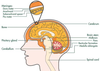 lymphoma cancer diagrams brain cancer diagrams